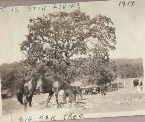 tree 1917
