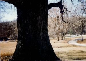 tree1995